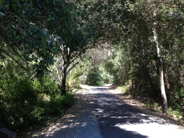 Where the Lafayette-Moraga Trail meets the Moraga Commons (Park)